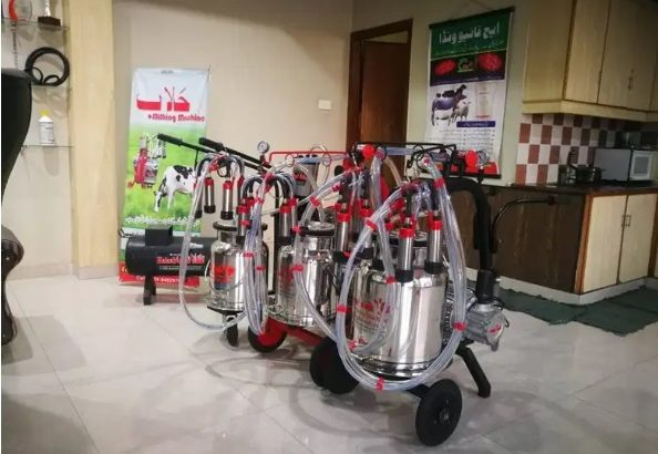 Milking machine for cows and buffalo